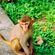 HKG_Monkey