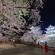 Sakura Shimbun